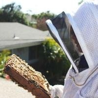 Why Keep Hive Inspection Notes