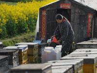 Nations Biggest Honey Packer Admits Laundering Chinese Honey