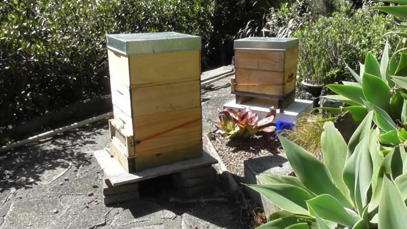 Dry day Beehives with robbing screens after split