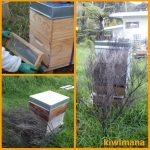 Moving Beehives a Short Distance_SM-min