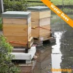 Beginner Beekeeper…Water Bees