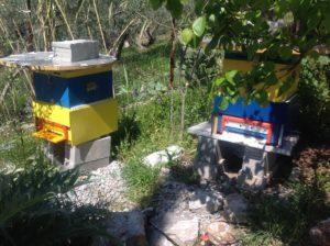 Greece 2 hives