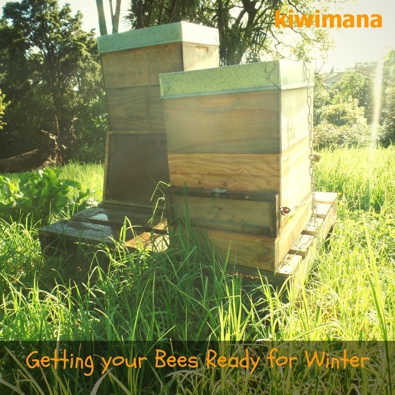 getting-your-bees-ready-for-winter_sm