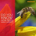 Do You Know How Bees Make Honey?