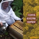 What are the 3 basics to start beekeeping?  Part 1 – Essential Beekeeping Equipment
