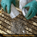 How to do a Sugar Shake Mite Count – Video