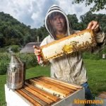 Why should you keep Beekeeping Records with James Wilkes from Hive Tracks – KM106