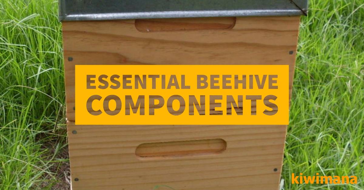 what are the 3 basics to start beekeeping part 2 5 essential