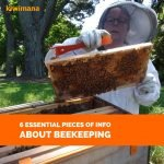 What are the 3 basics to start beekeeping? Part 3 – 6 Essential Pieces of Info About Beekeeping