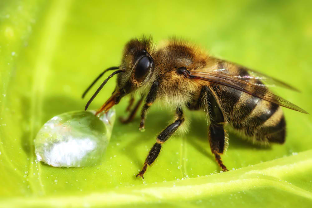 Bees also drink water so prepare a bee bath for them to drink fresh water