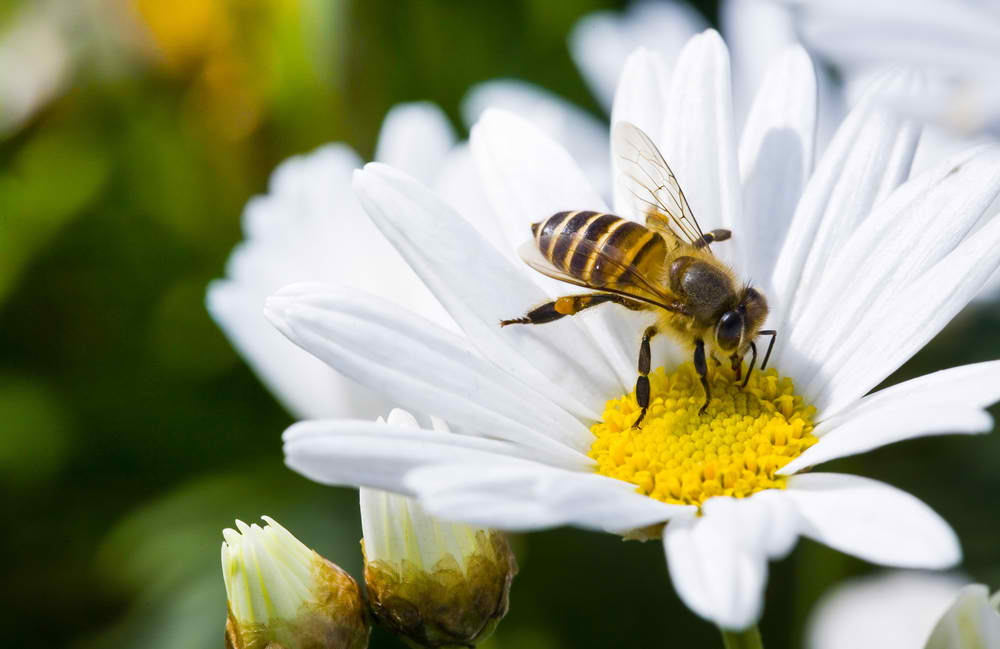 Bees love flowers that have sweet nectar.