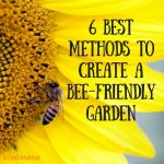 6 Best Methods to Create a Bee-Friendly Garden