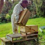 Wintering Down Beehives