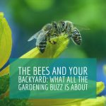 The Bees and Your Backyard: What All The Gardening Buzz is About