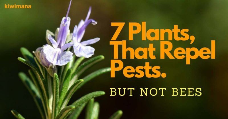 7 Plants That Repel Unwanted Insects, But not Bees