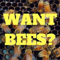 Looking to buy Bees