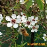 How do you tell the difference between Manuka and Kanuka?