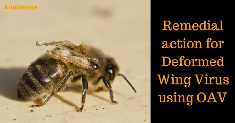 b0609d7f Sick Bees Varroa problem – Remedial action for Deformed Wing Virus using OAV