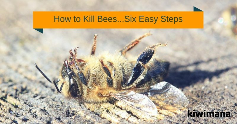 ecc4b806 How to Kill Bees