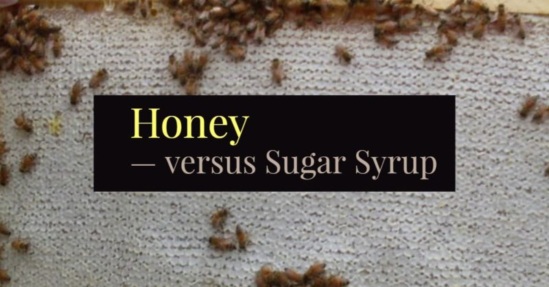 Honey vs Sugar Syrup