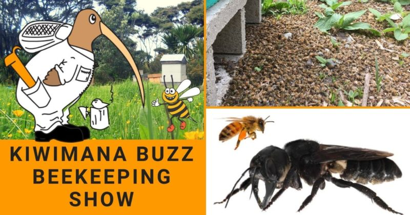 51f08cd0bb Thousands of Bees Killed in Lyttelton – KM140